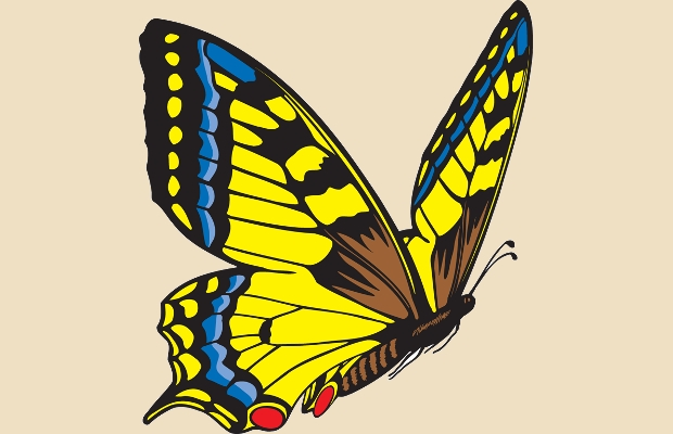flying butterfly clipart