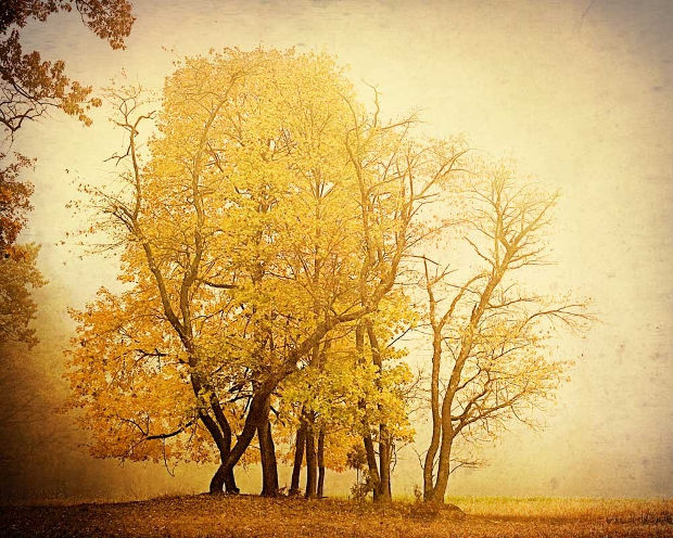 vintage nature photography2