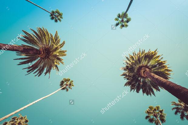 vintage palm tree photography