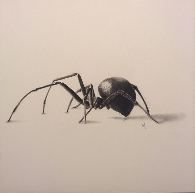 3d charcoal spider drawing