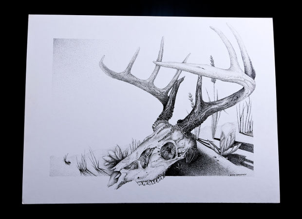 3d deer skull drawing