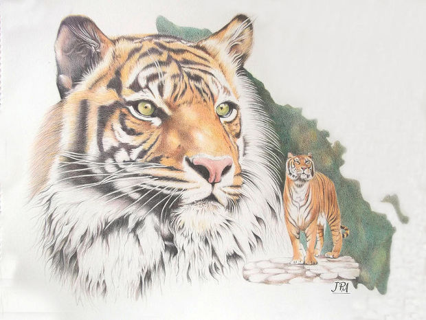 3d colorful tiger drawing