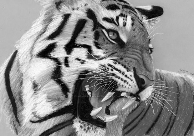3d tiger pencil drawing