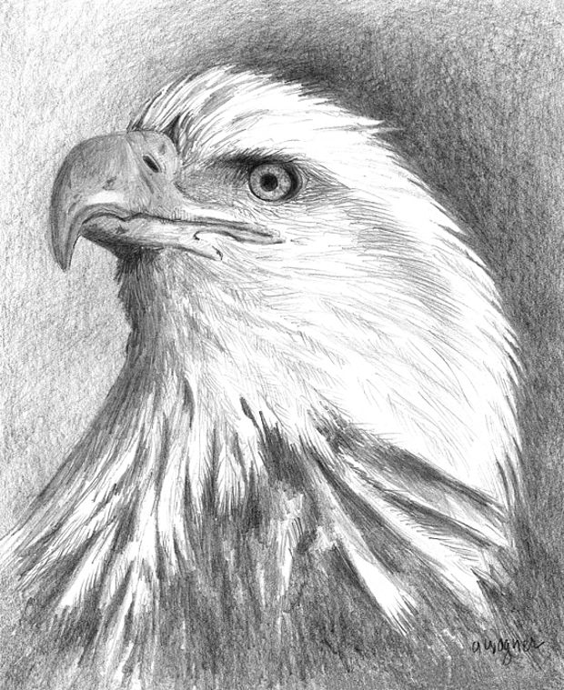 3d bald eagle drawing