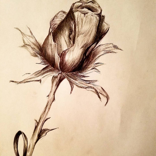 3d rose bud drawing