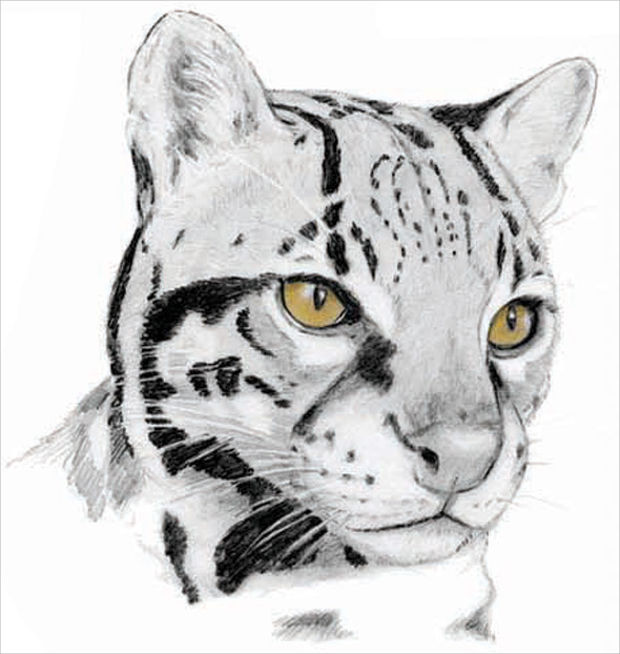 animal pencil sketch drawing