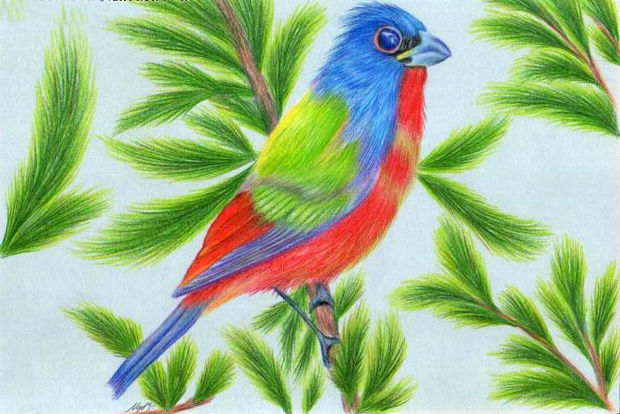 Bird Colored Pencil Drawing