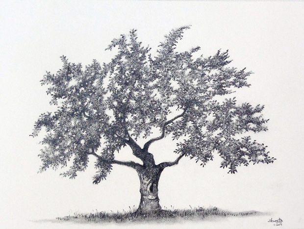 Apple Tree Pencil Drawing