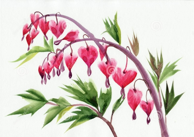 Bleeding Heart Flower Clipart