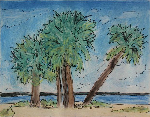 Beach Palm Tree Drawing