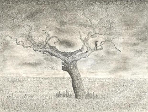 Dead Tree Pencil Sketch Drawing