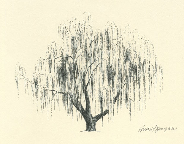 how to draw a realistic willow tree