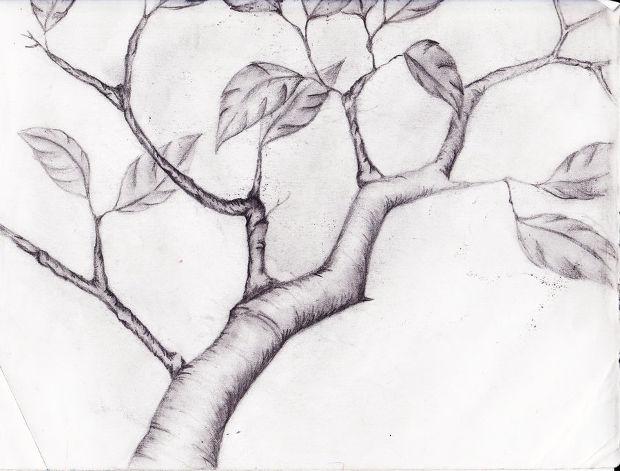 Free Tree Branch Drawing