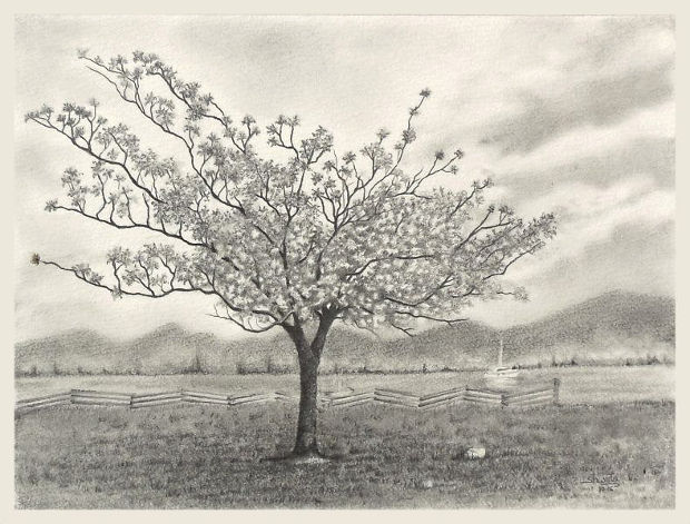 Blossom Tree Drawing: 25+ Tree Drawings, Art Ideas