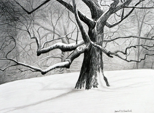 Old Tree Pencil Drawing