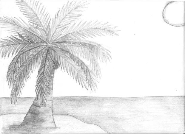 Beach Coconut Tree Drawing