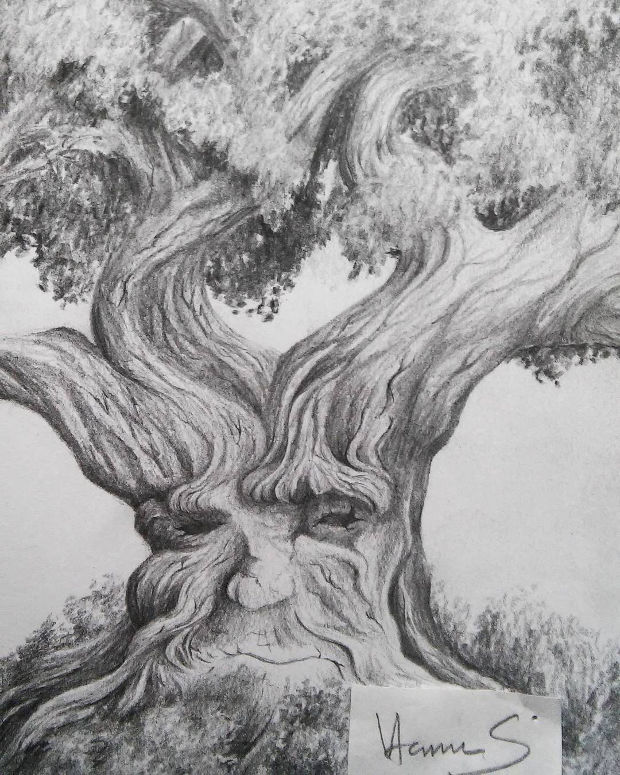 Black and White Oak Tree Drawing