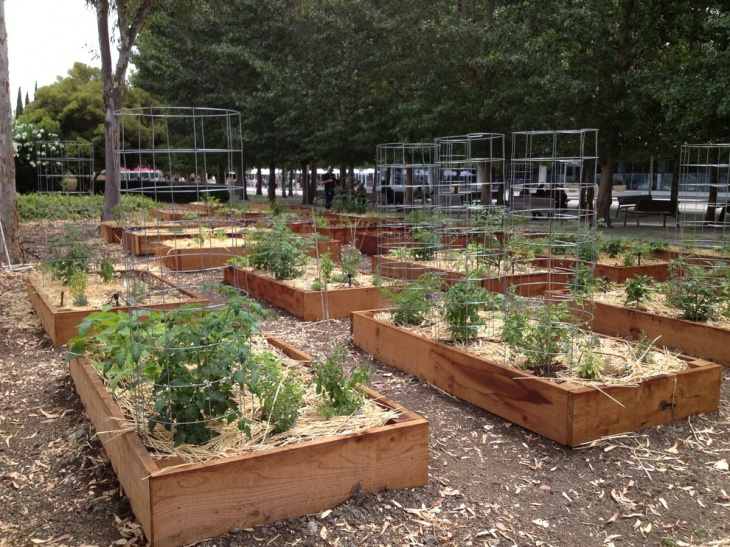 organic gardening idea
