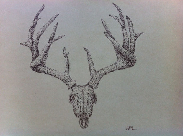 deer skull pen drawing