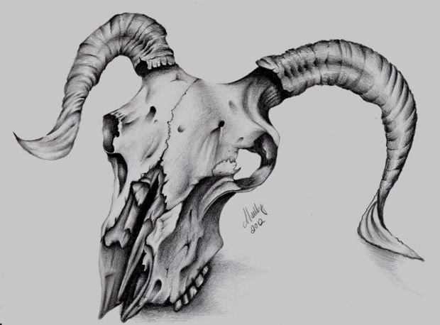 wild animal skull drawing