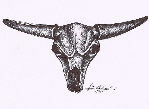 bull skull pencil sketch drawing