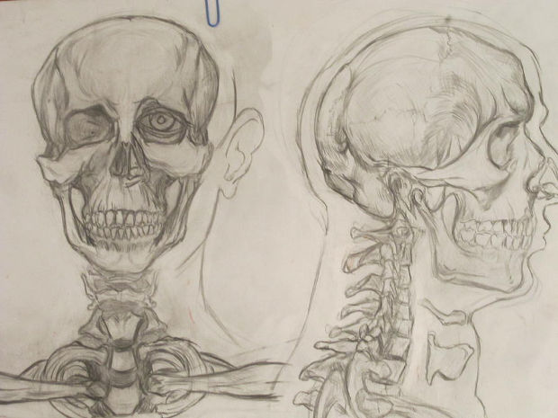 old human skull drawing