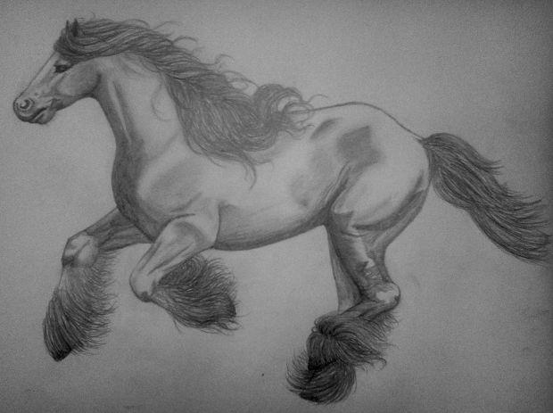horse a3 pencil drawing