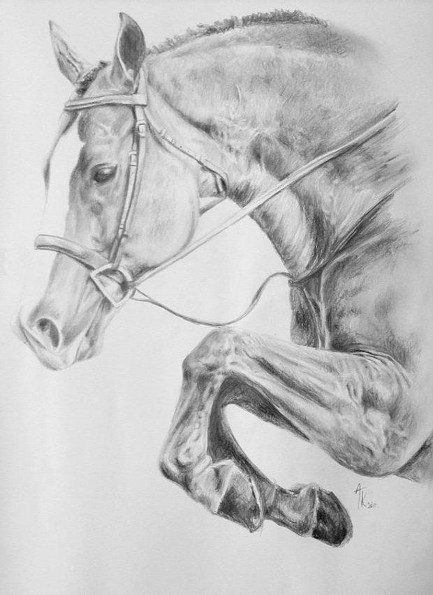 jumping horse pencil drawing