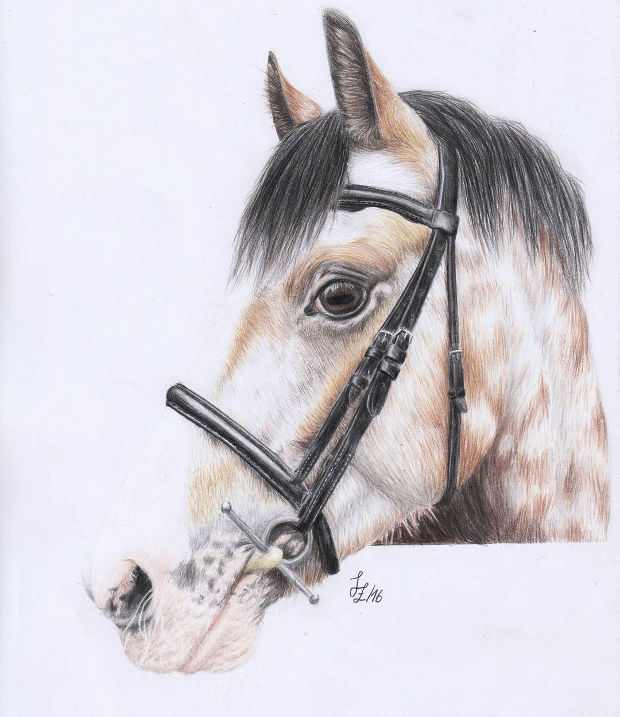 Horse Head Colored Pencil Drawing