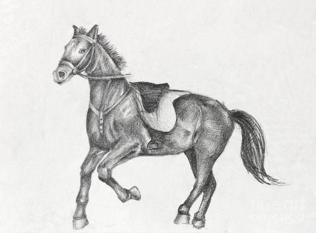 black and white running horse drawing