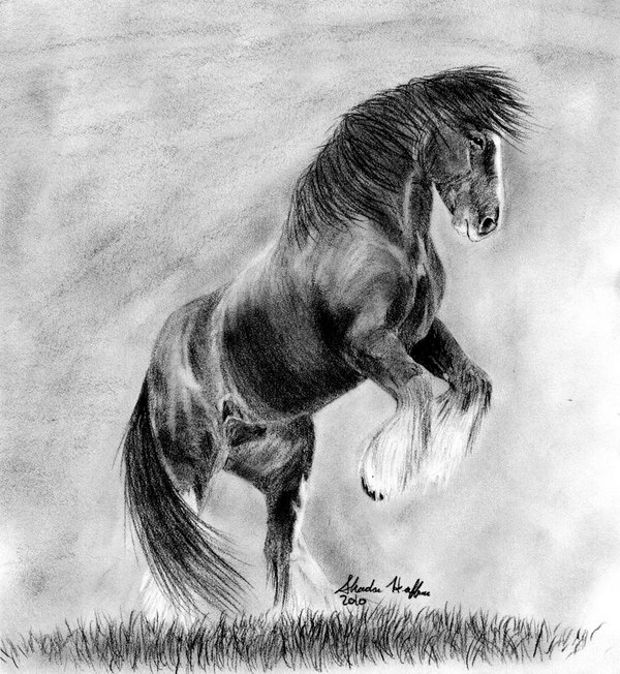 Realistic Rearing Horse Drawing