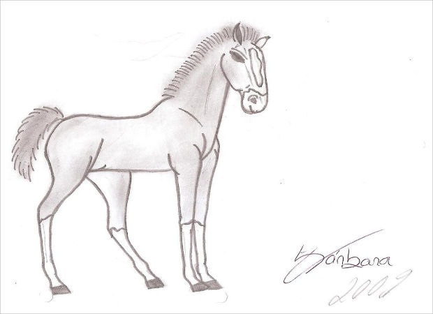 small baby horse drawing