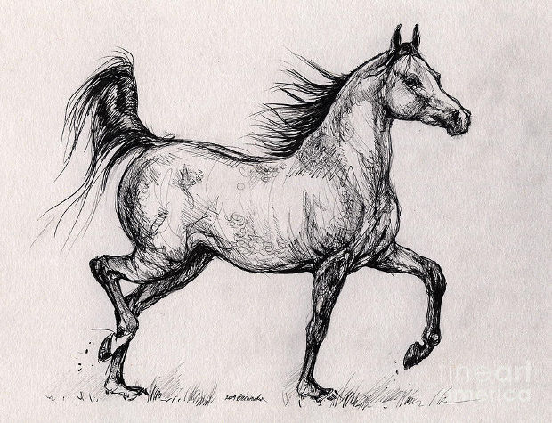 running baby horse drawing