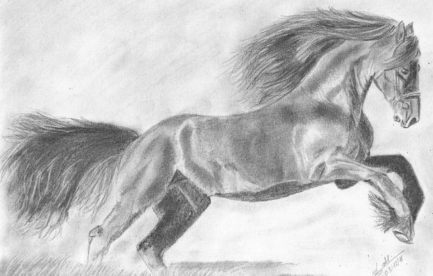 Wild Horse Pencil Drawing