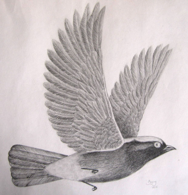 cute flying bird drawing