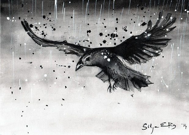 flying bird in rain drawing