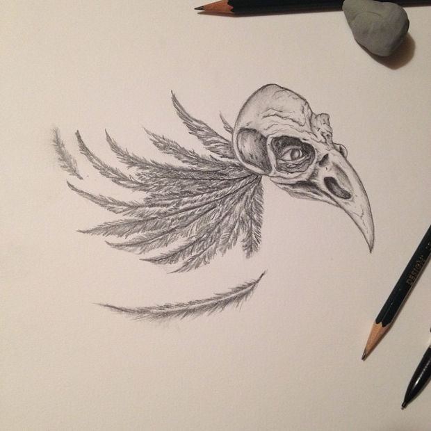 bird crow skull drawing