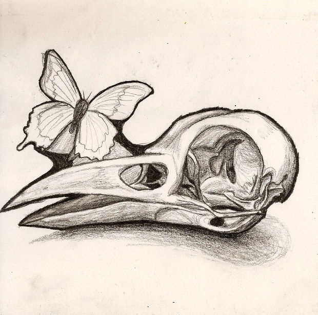 bird skull and butterfly drawing