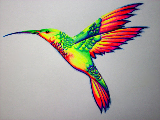 colorful humming bird drawing