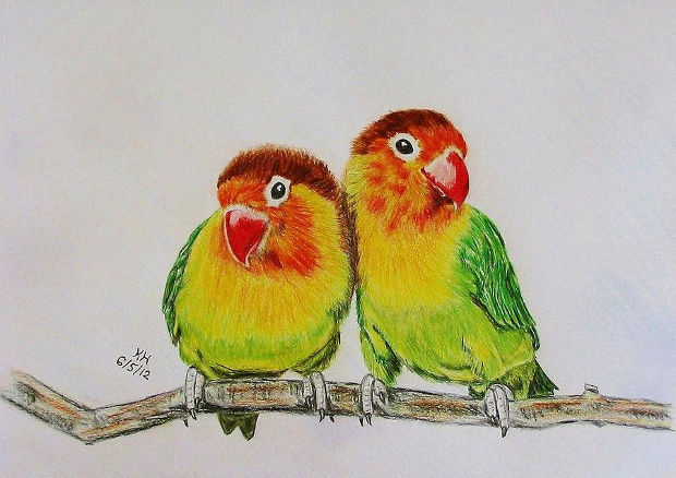 realistic love bird drawing