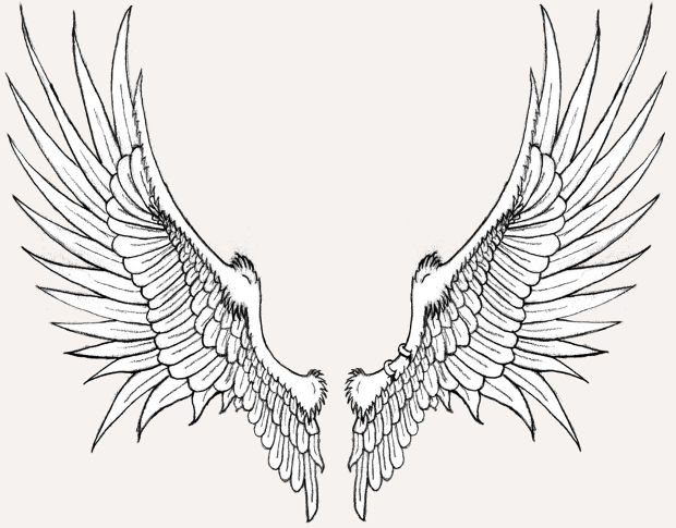 simple bird wings drawing