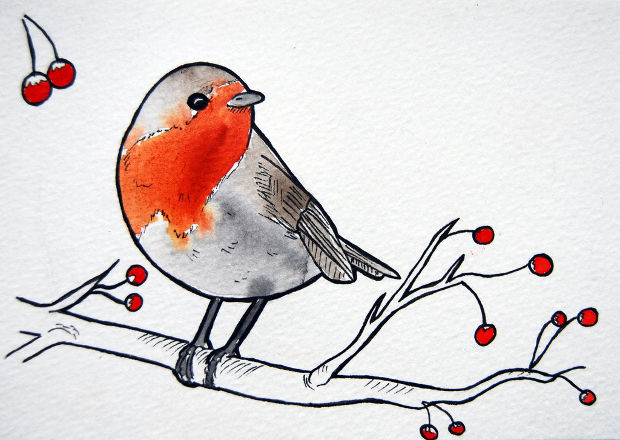 cute robbin bird drawing