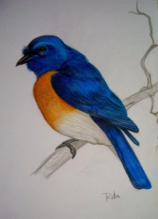 cute blue bird drawing