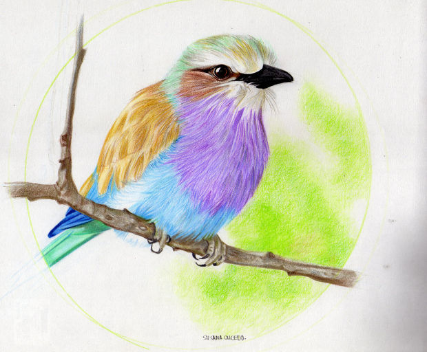 cute colorful bird drawing
