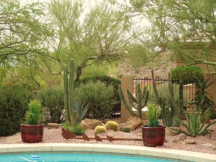 16 Cactus Garden Designs Ideas Design Trends Premium