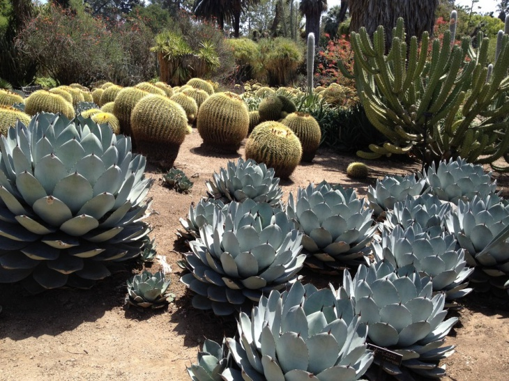 Outdoor Cactus Plants