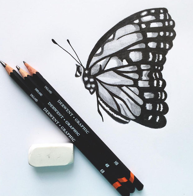 black and white butterfly pencil drawing