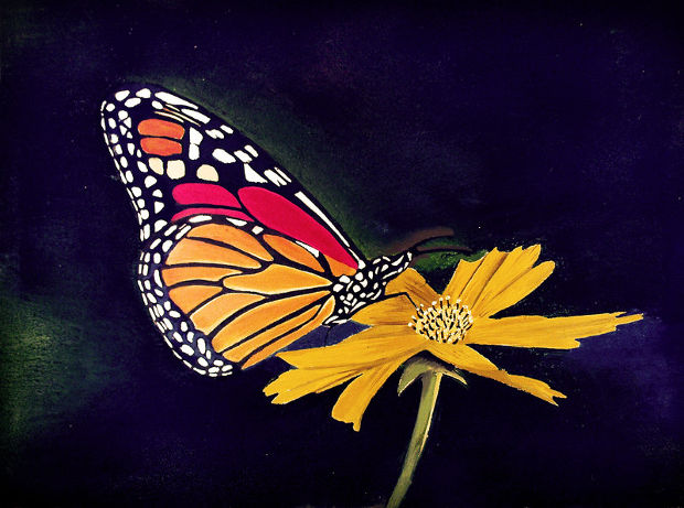 colorful butterfly flower drawing