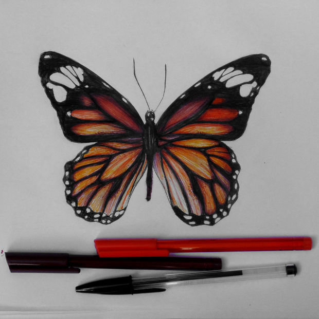 20+ Butterfly Drawings Art Ideas | Design Trends - Premium PSD Vector Downloads