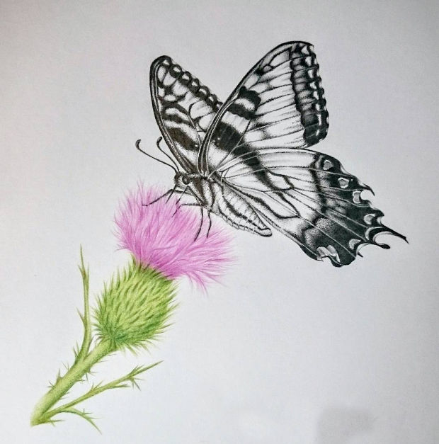 nature butterfly on flower drawing